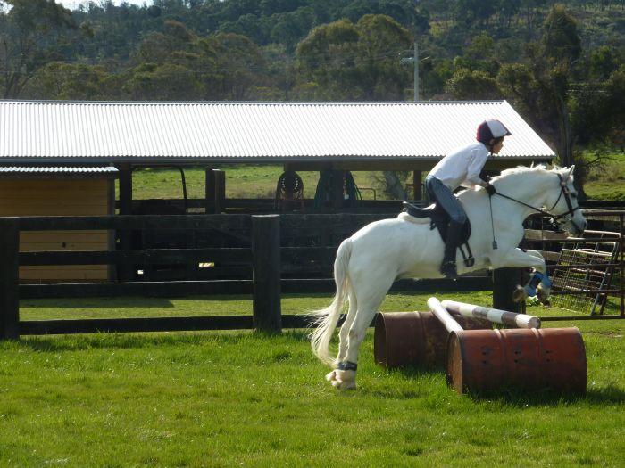 Birdwood Royalty - 12.2hh Australian Riding Pony