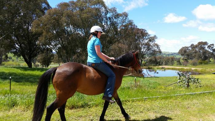 Bertie - Perfect Second Pony!
