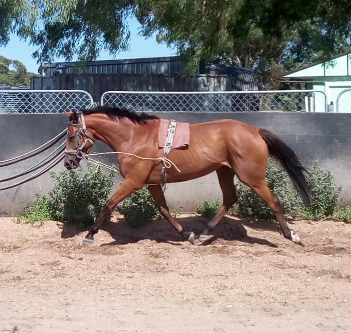 Flash moving tb mare