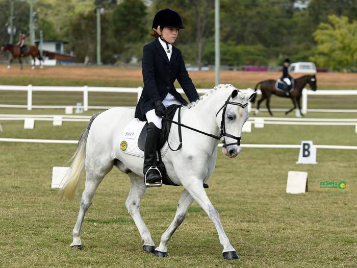 Dressage Pony with super temperament