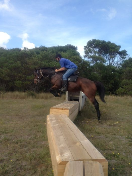 ''Must sell' lovely big thoroughbred mare