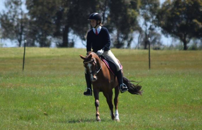 Extremely sweet mare with loads of potential