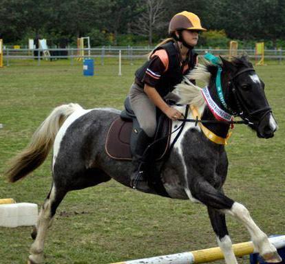 beautiful pony club mare