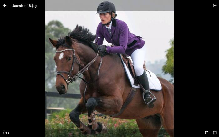 Warmblood Gelding by Parco