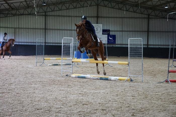 Fancy Young Calgary GNZ mare