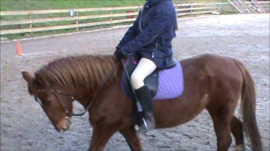 Very quiet 13.2hh Pony