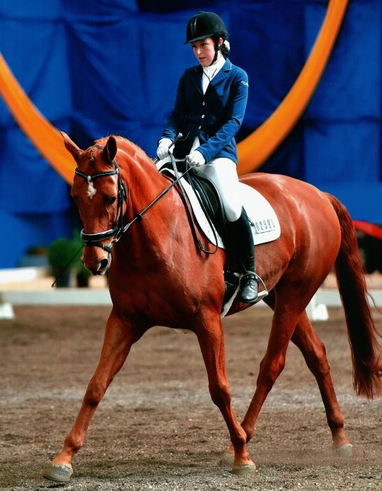 Fabulous Dressage Horse - Suit Young Rider, ARC