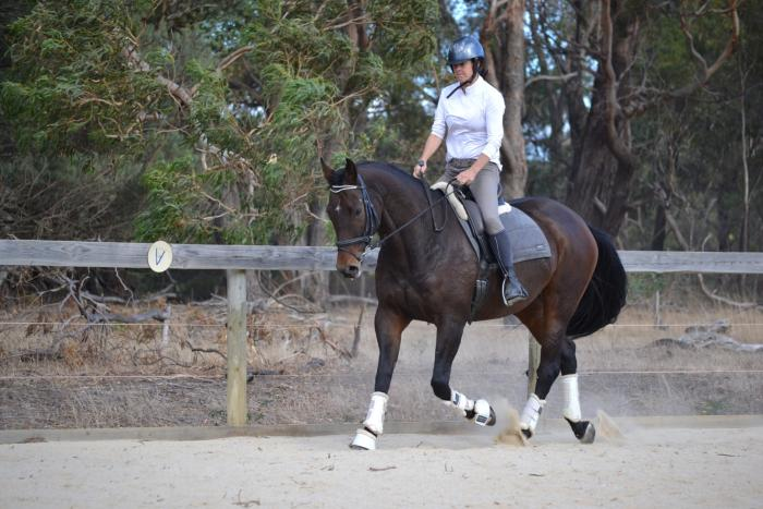 Gorgeous looking mare: low level ARC / trailriding