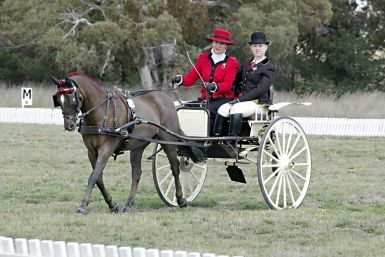 Tait CDE Carriage Dressage Phase