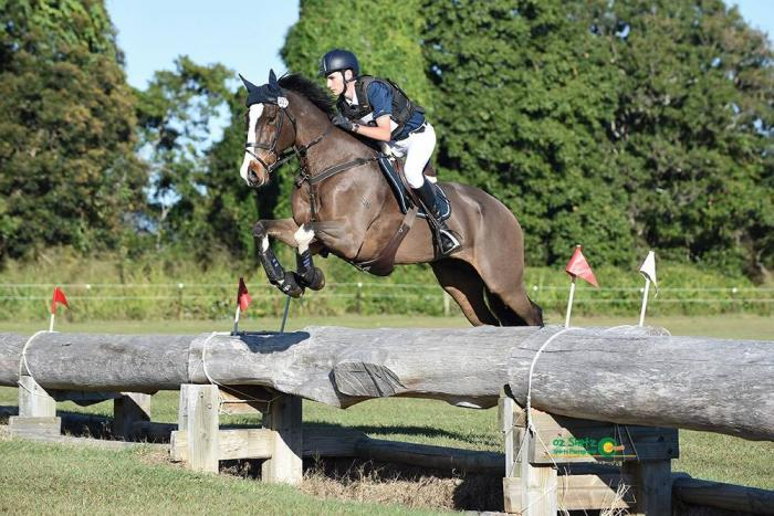 Two Star Eventer/1.30m Showjumper