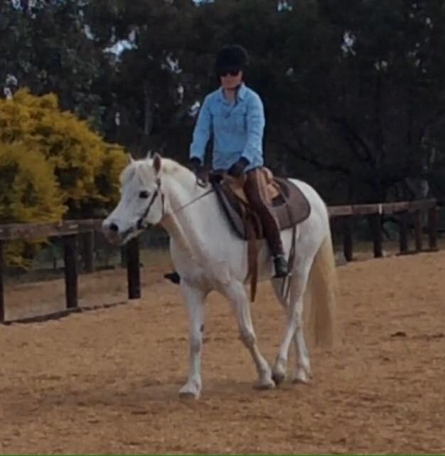 APSB Australian Pony Gelding