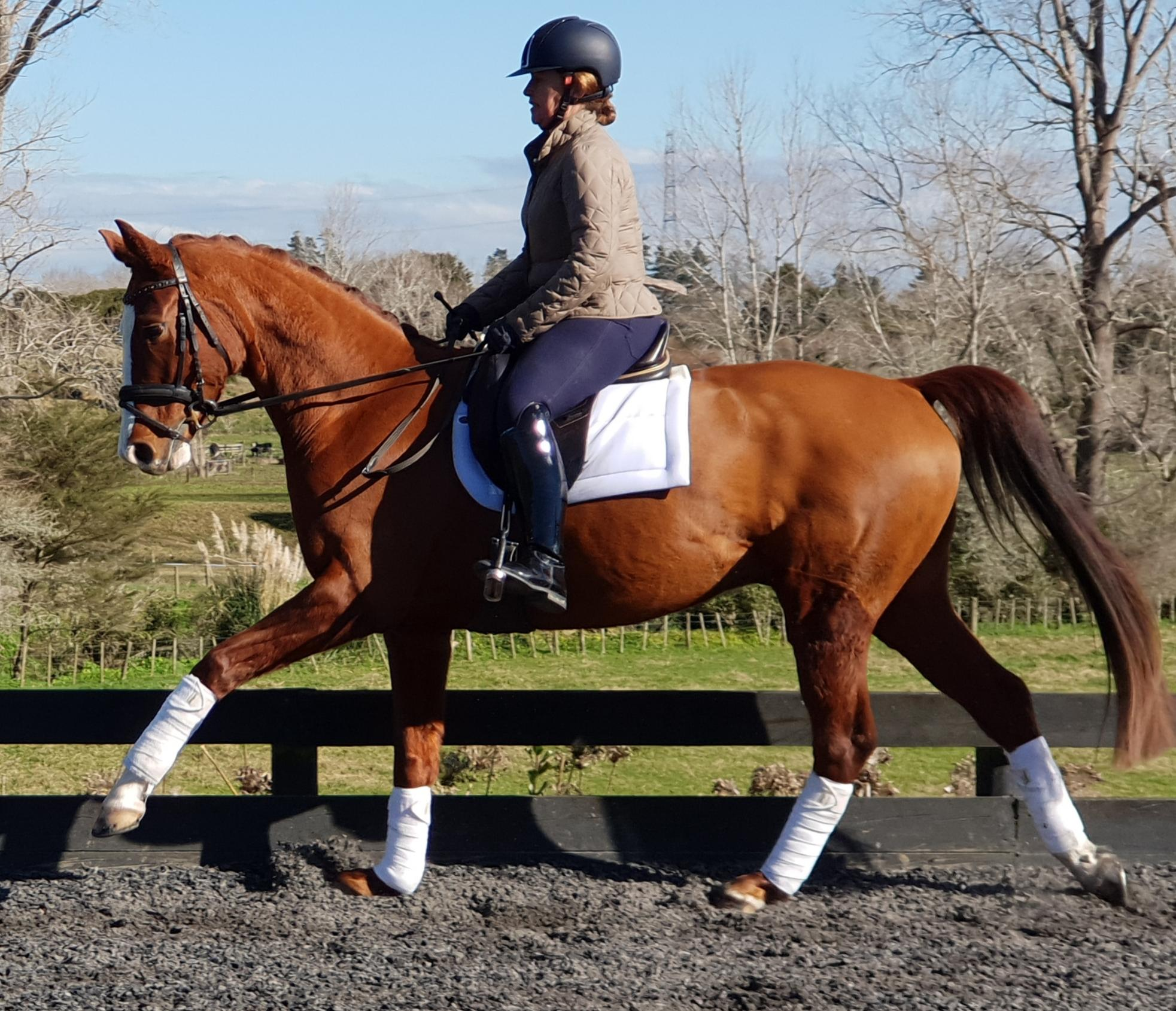 Perfect Sir Donnerhall/Don Frederico/Anamour