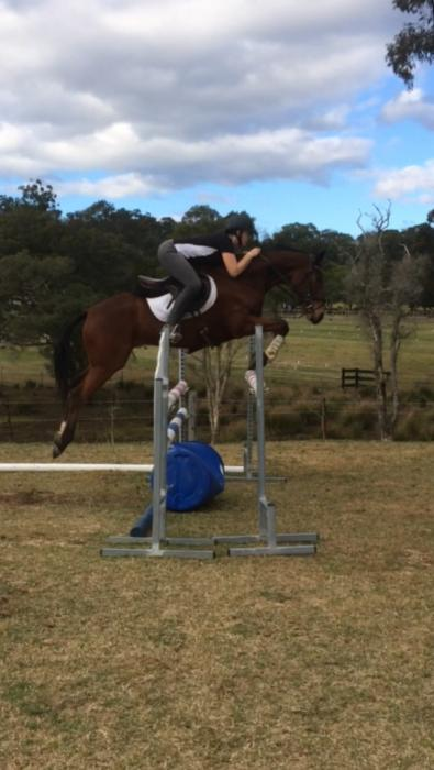 Lovely Quiet TB gelding