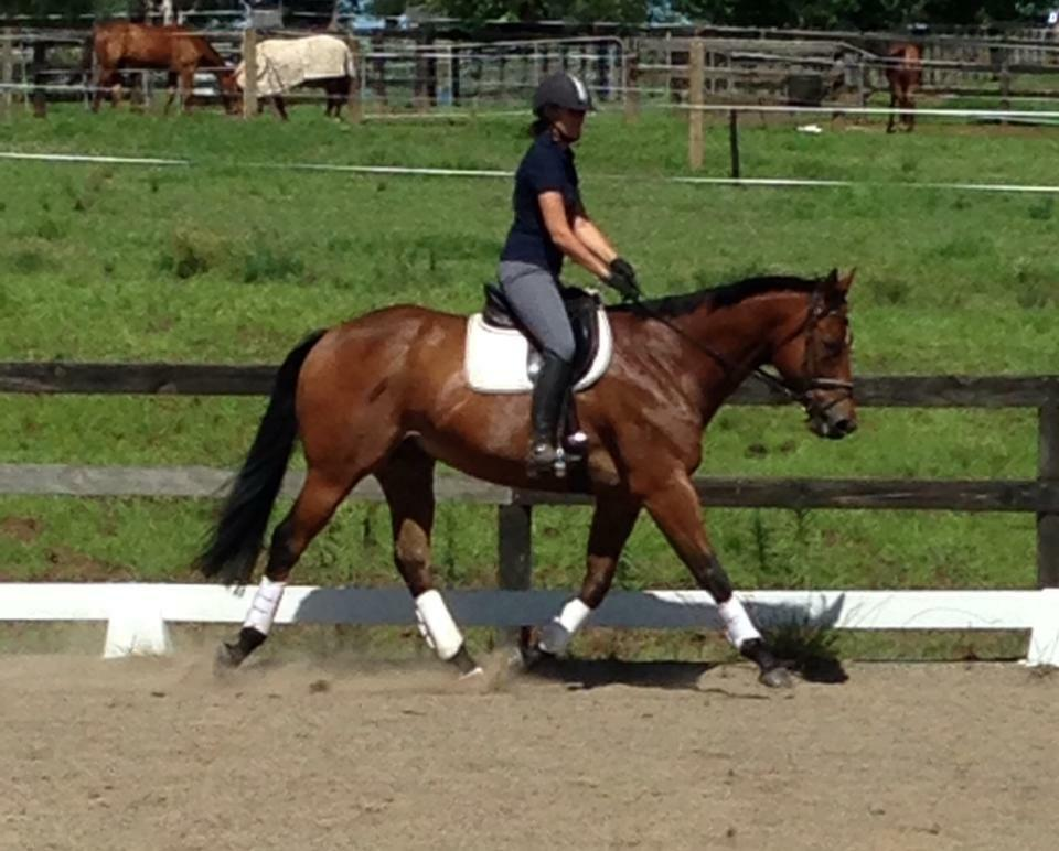Fabulous Adult Amateur Horse For Sale