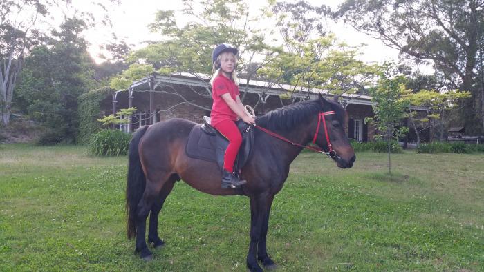 Calm sensible beginner child's pony