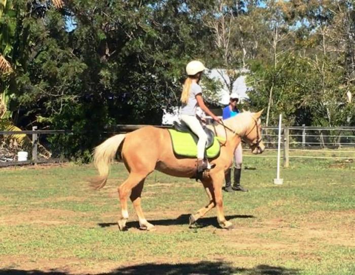 Stunning Palomino Pony Club Mount