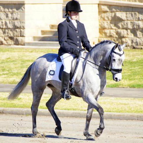 Stunning Dressage Pony.