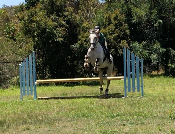 5yo Irish Sport Horse Mare
