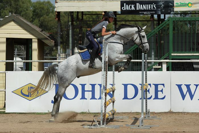 Gorgeous Warmblood with loads of potential