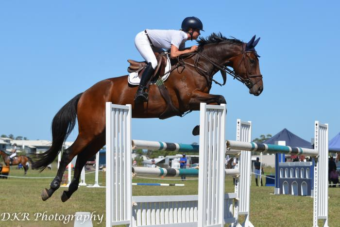 Eventing/Show jumping Schoolmaster