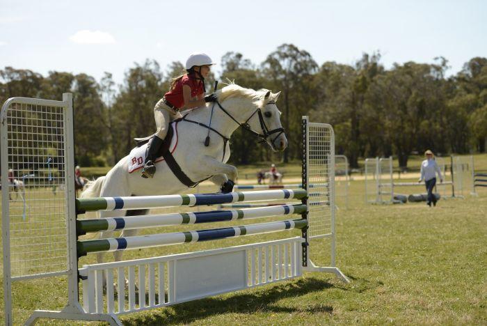 Beautiful Grey All Rounder Pony