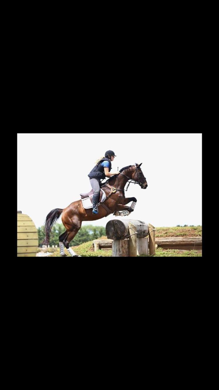 FOR SALE: 1* EVENTER 'CYGNET STAR