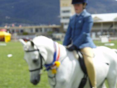 RHS Ridden Australian Pony