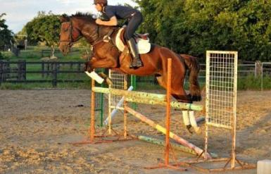 Stella jumping 2010