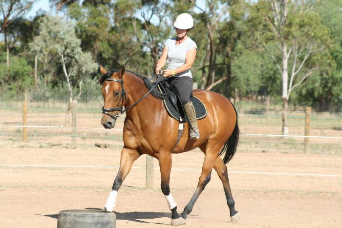 Handsome Bay Thoroughbred Gelding