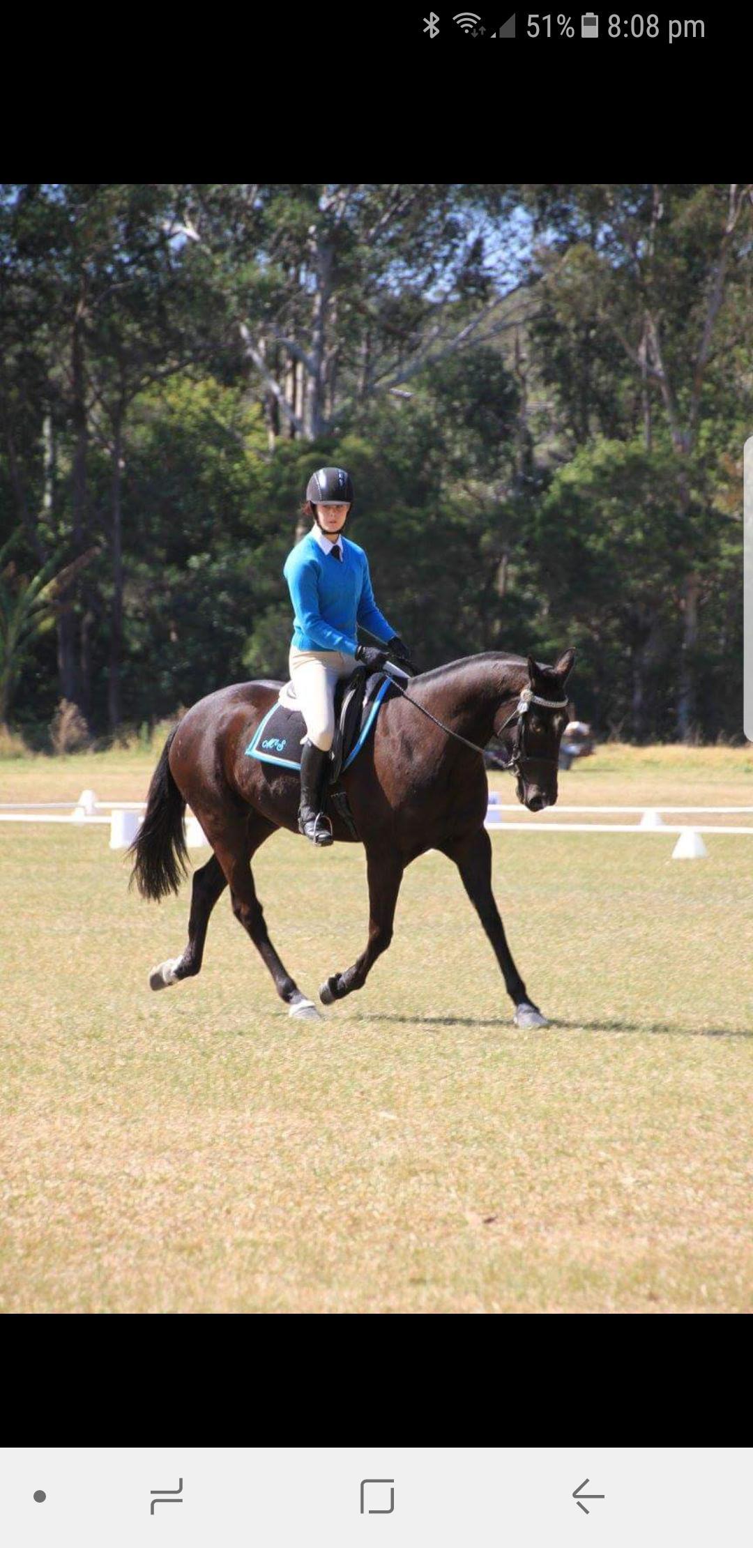 Ultimate Allrounder Registered Stock Horse