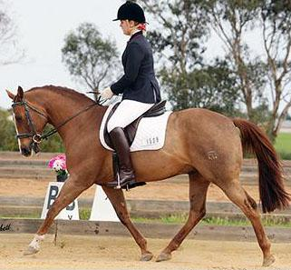Inter School/ Pony Dressage