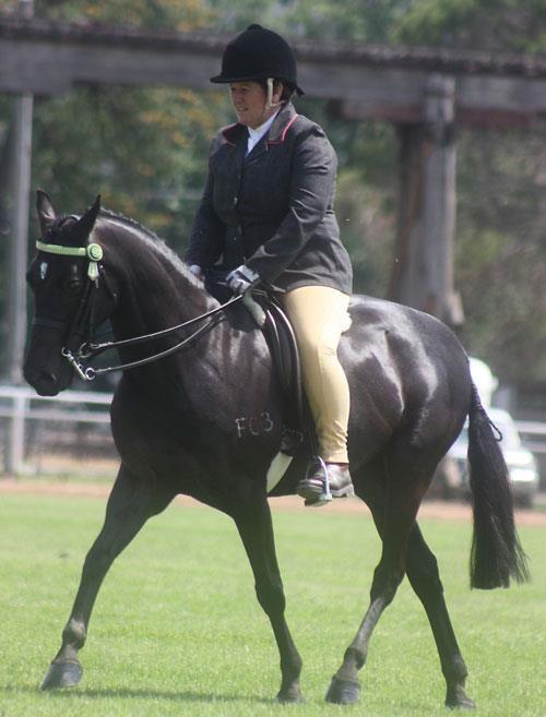 pony ,show or pony club,
