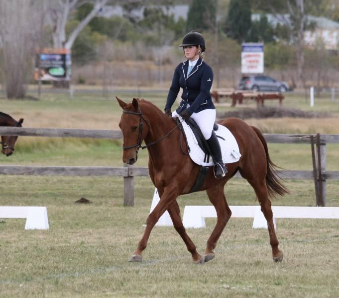 Pretty, Sweet, Elegant Warmblood Cross Mare