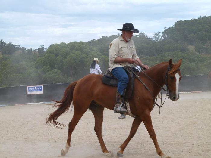 STOCK HORSE X QUARTER HORSE GELDING 15 hh