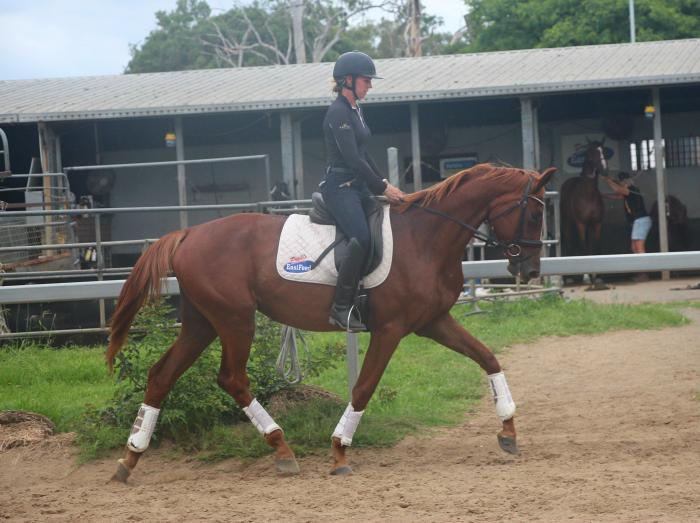 3yo Lauries As Mare for Sale!