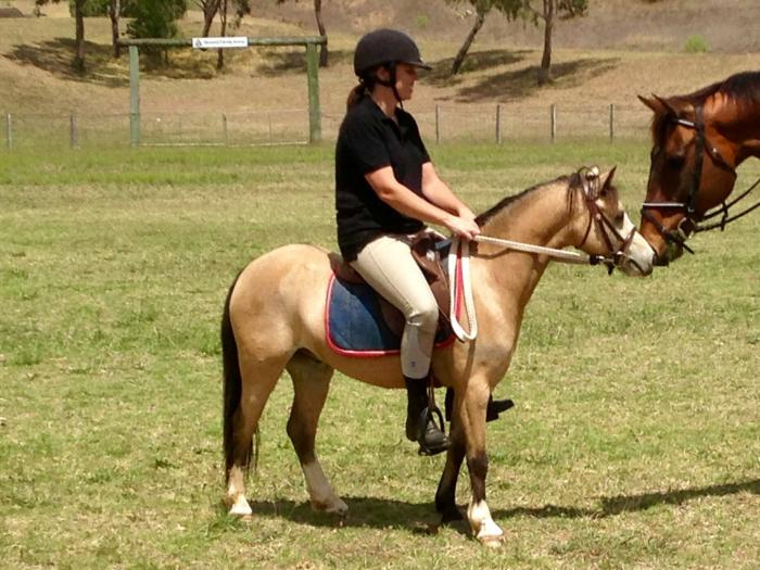 Gorgeous show quality welsh pony