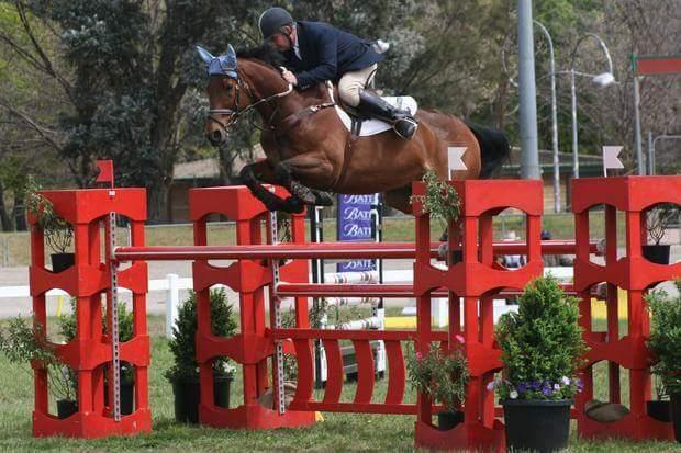 Warmblood xThoroughbred