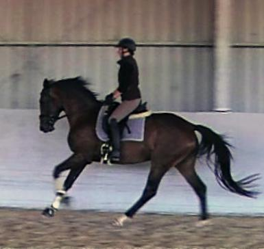 Canter
