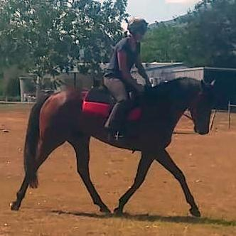 Outstanding Eventing Prospect