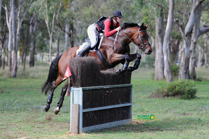 Talented mare that makes any rider look great!