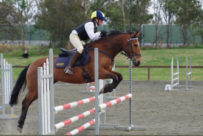 Victory Oak - fun all rounder,  pony club horse
