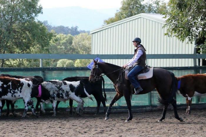 Quiet Stock Horse Allrounder