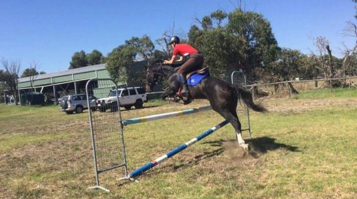 FLASHY SHOWJUMPER