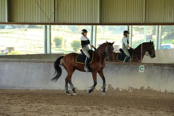 Medium level Dressage Horse - Andalusian X
