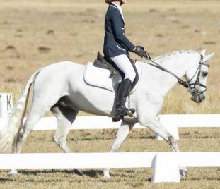 Rachem Tobias - Performance Pony