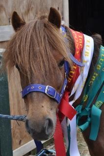 Jake with his ribbons