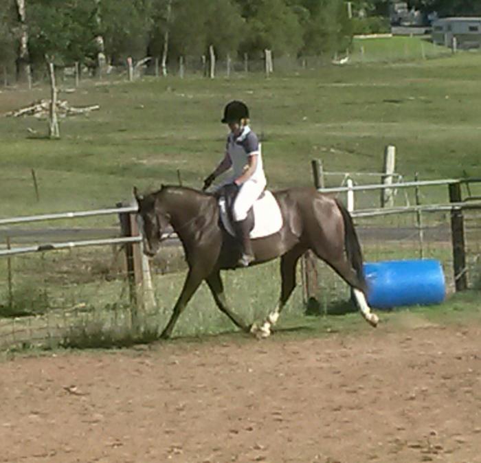 Stunning 6yo mare