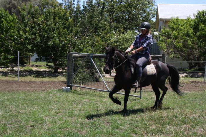 Coffin Bay Brumby/pony 12.3 hh