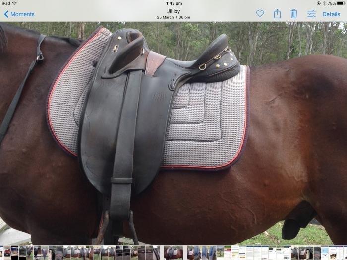 Australian stock saddle 15 inch