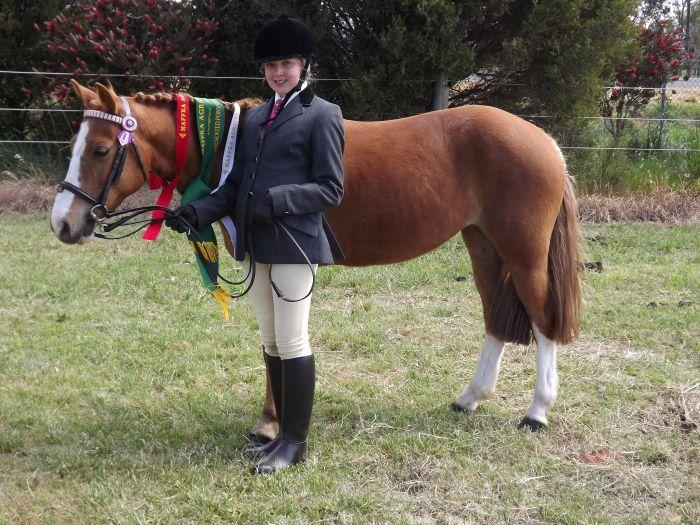 Second Pony Allrounder 12.2hh